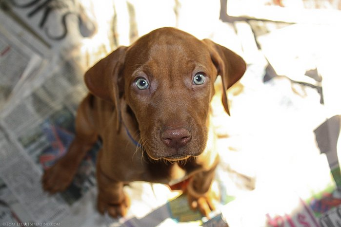 A brown dog looking up at thye camera - freelance photography jobs.