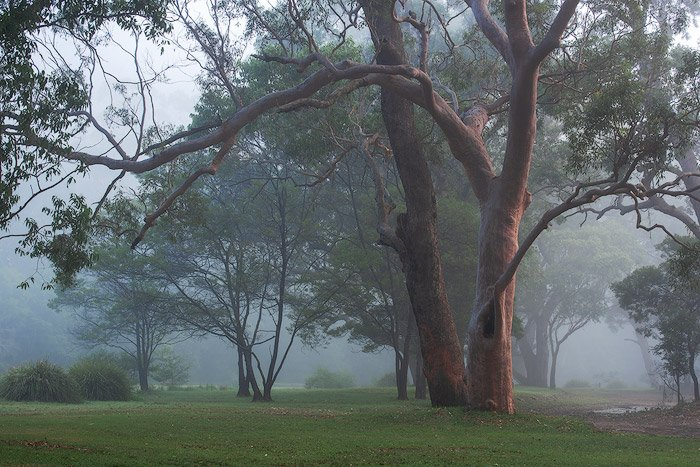 A group of trees in foggy weather