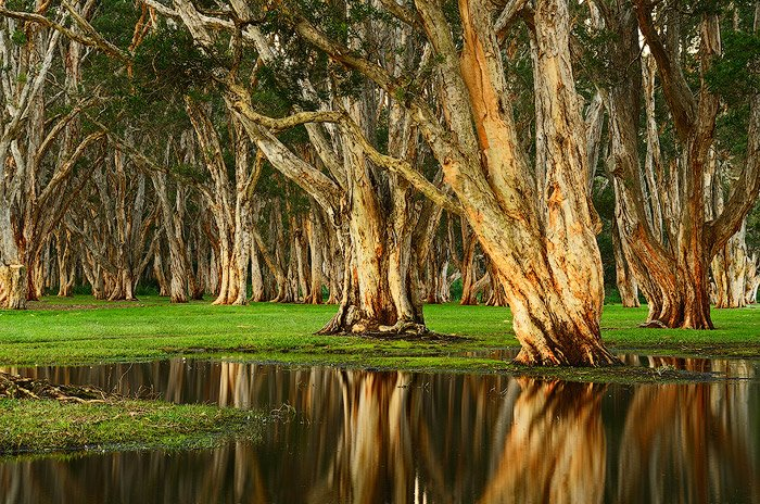A forest of trees overlooking vast pools of rainwater in Centennial Park, Randwick, NSW, Australia