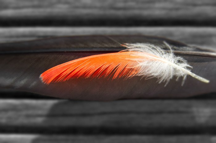 Macro pictures of an orange and white feather
