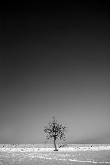 A bare tree in the centre of a snowy winter landscape