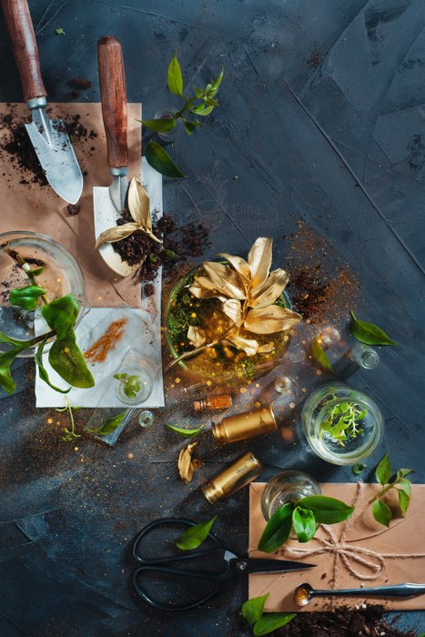 Botanist workplace with herbarium, clipboard, field notes, gardening scissors and green plants in glass vases on a concrete background. Rare golden flower top view. Still life photography ideas