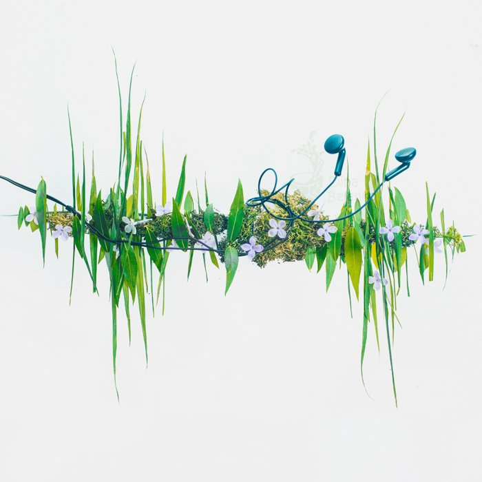 An interesting still life photography composition of leaves, flowers and earphones