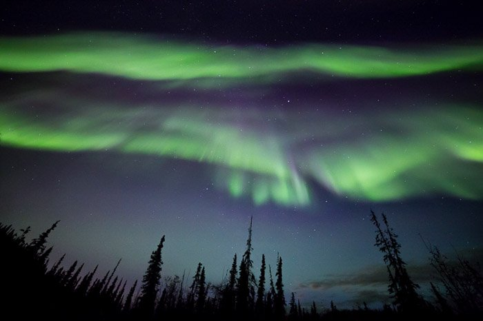 Photo of the northern lights over the silhouettes of trees. Winter photography.