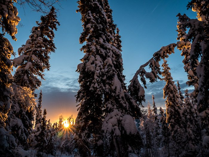 Beautiful shot of snow covered trees at sunset. Winter photography.