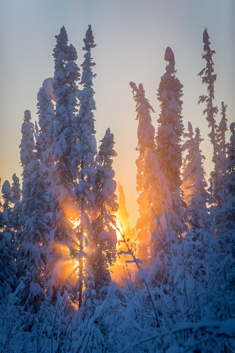 Evening winter photography of a sunset through icy trees.