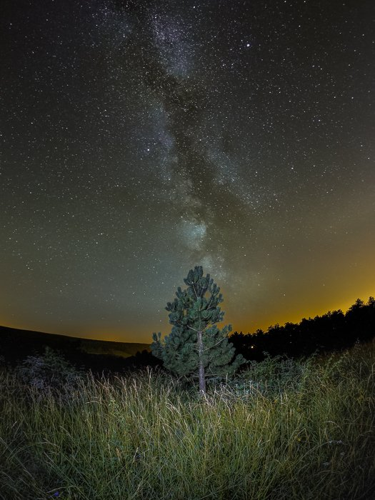 Other worldly night sky photography of a tree in the centre of a grassy landscape, starry sky and star trails above