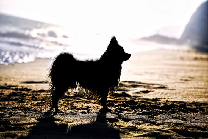 The silhouette of a small dog on a beach