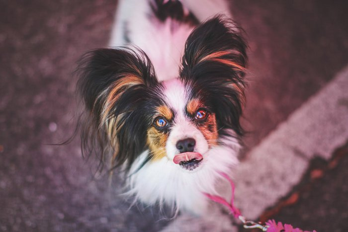 Cute pet photography perspective example of a small dog looking up at the camera