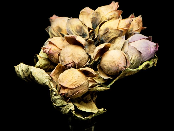 A still life of dead flowers on a black background for photography