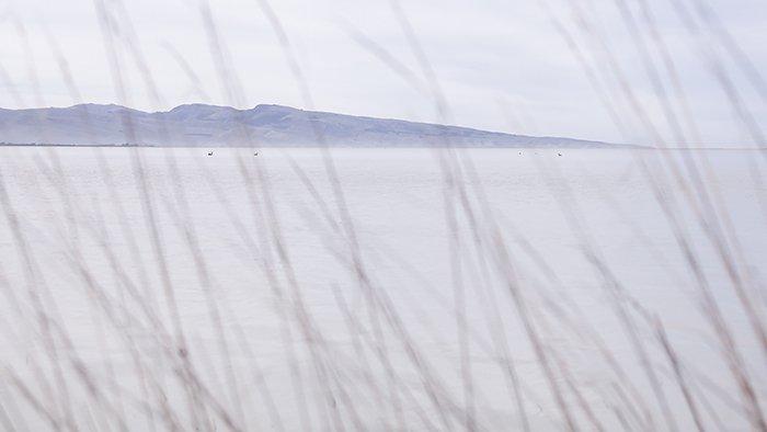 A landscape at Te Waihora in pastel color.