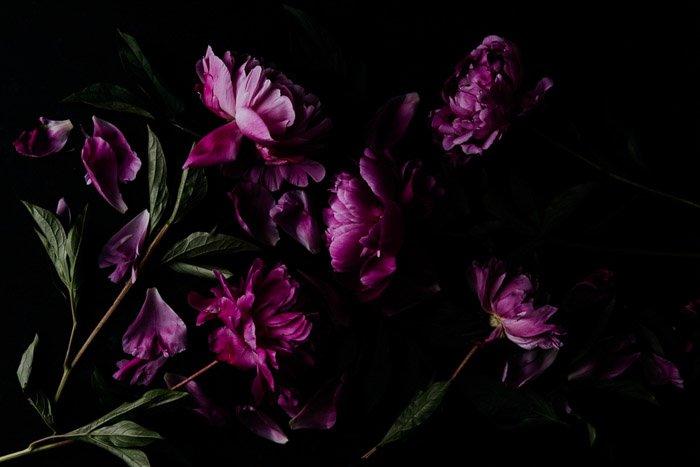 Atmospheric overhead flower photography shot of pink peonies