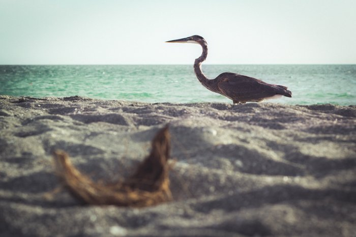 A low angle photo of a bird on the seashore with ocean in the background
