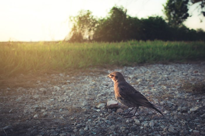 A low angle nature shot of a little bird standing on gravel
