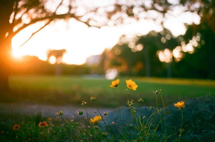 Dreamy low light photography of a green landscape with yellow flowers in the foreground