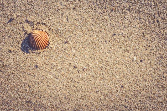 An overhead shot of a shell on sand, creative beach photography ideas.