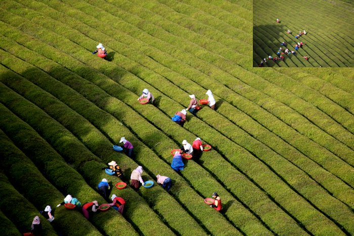 An overhead travel photo of people working in Paddy fields