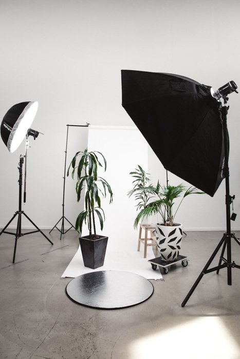 A photography studio set up with lights and plants infront of a white backdrop