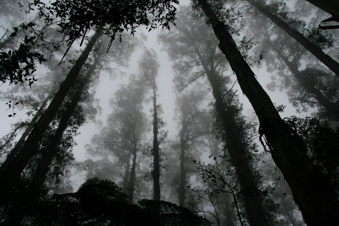 a black and white photography shot of an atmospheric forest