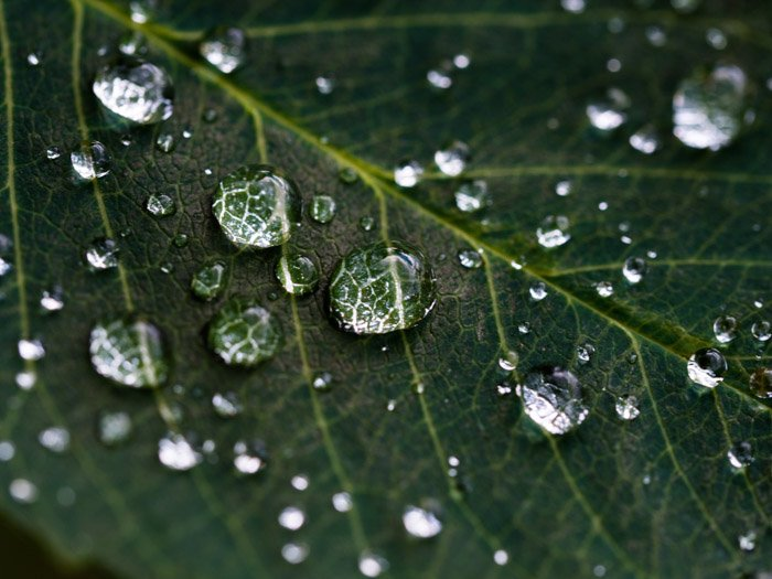 a macro shot of water droplets on a leaf