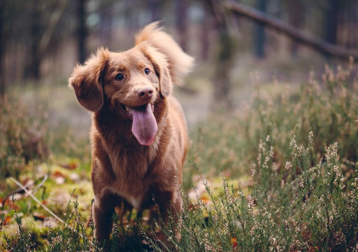 cute pet portrait of a brown dog outdoors