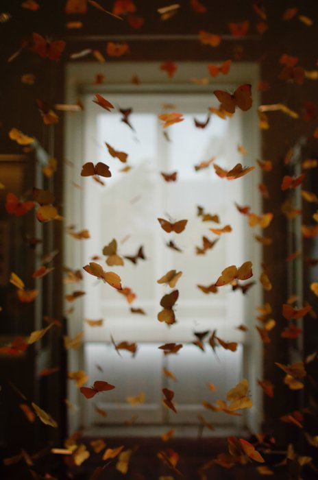 A photo manipulated with many butterflies in the air