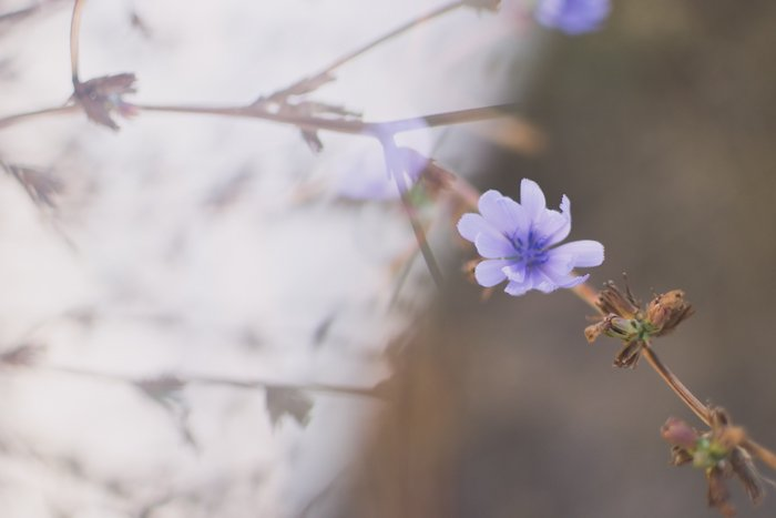 a close up of lilac flowers with dreamy prism photography effect