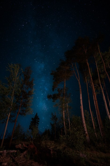 Atmospheric shot of a forest area at night with beautiful star filled sky above