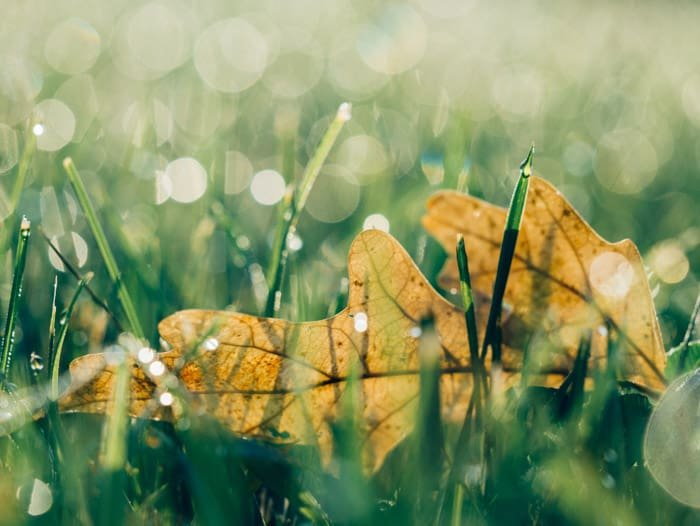 Macro photo of a leaf on grass with good bokeh background