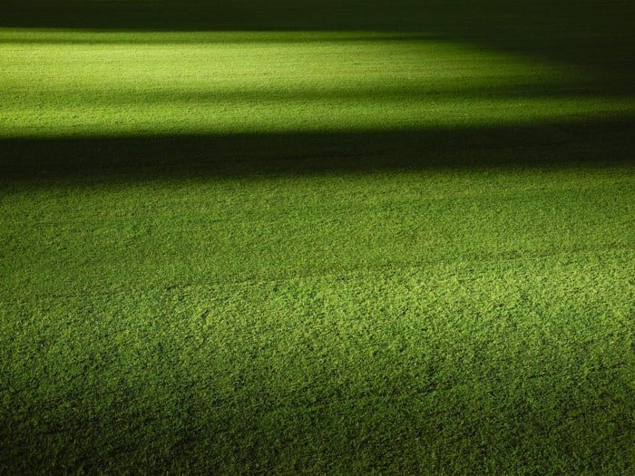 Photo of grass with shadowy bokeh effect background