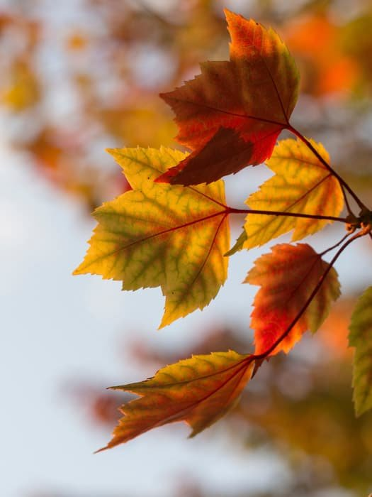Macro photo of autumn leaves with bokeh effect background