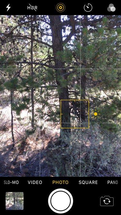 A screenshot of an iphone photography camera capturing an image of a tree