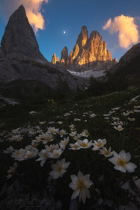 Beautiful landscape shot with flowers in the foreground and a craggy mountain in the background