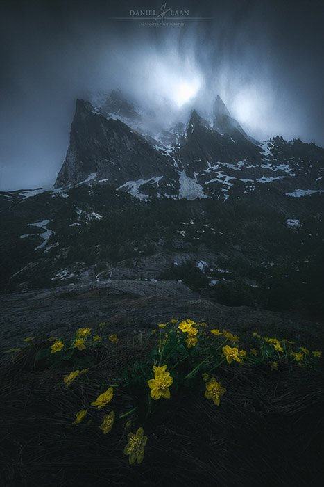 Dark atmospheric rocky mountain photo with yellow flowers in the foreground.