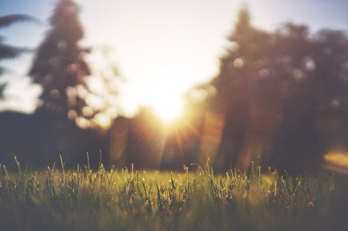 Dreamy blurred photo of a grassy outdoor area at sunset