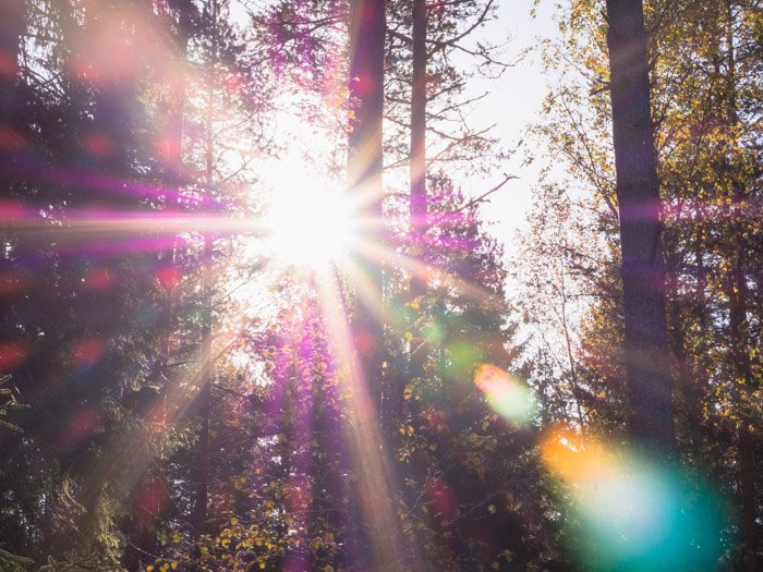 Dreamy blurred photo of a forest with coloured light coming between the trees