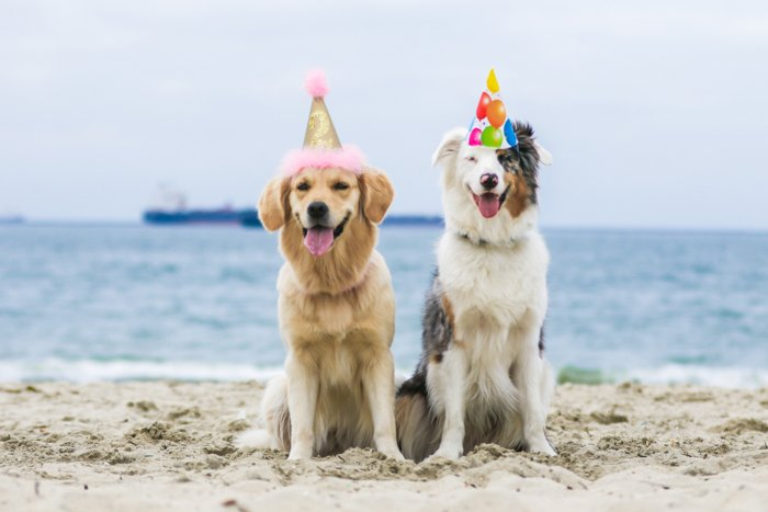 Two cute dogs in party hats posing at the beach