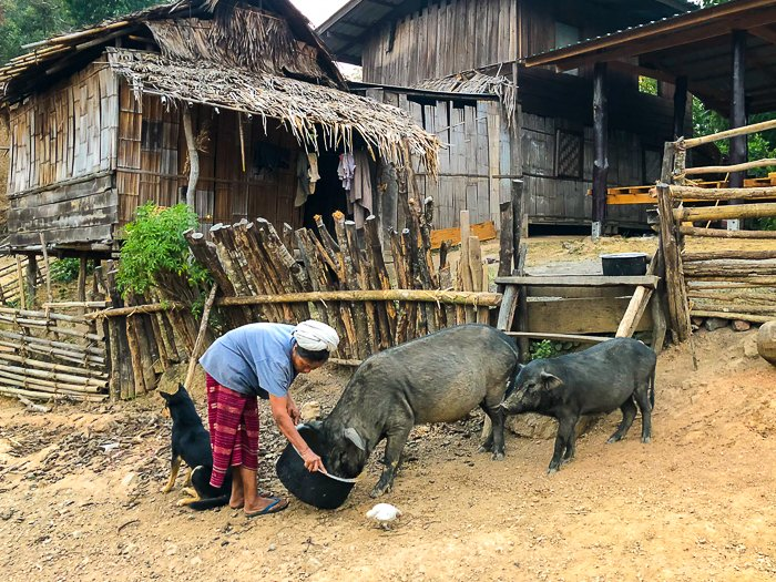 A travel image of a woman feeding pigs - photography magazine submissions