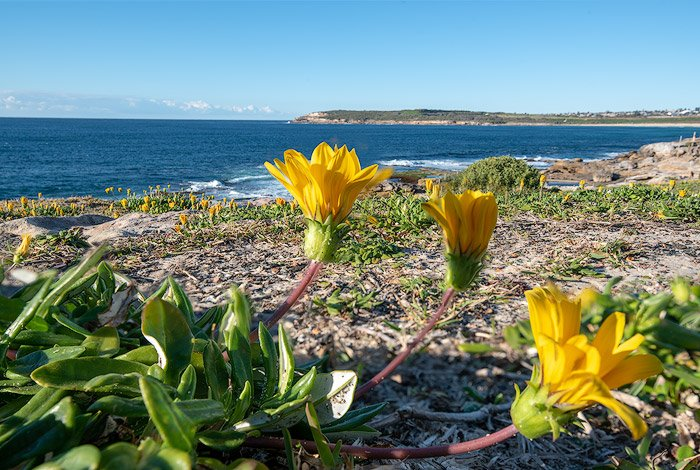 A focus stacked image of yellow flowers on the beach, bracketing photography example