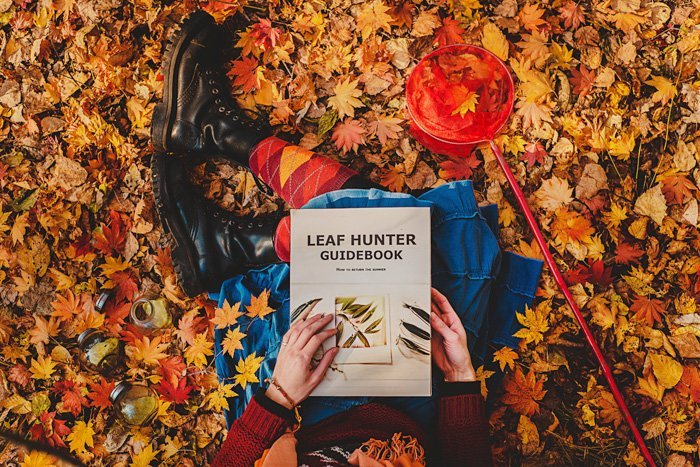 view from the top. girl sitting in a pile of fallen orange leaves in autumn, a red butterfly net beside her, holding a book: Leaf Hunter Guidebook