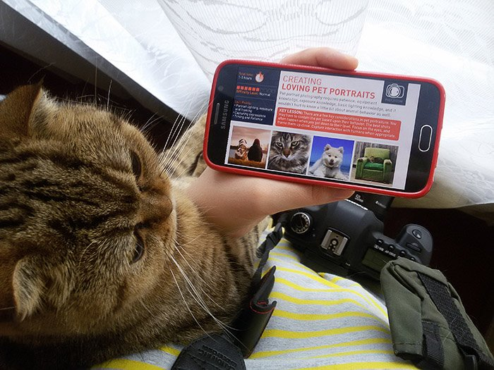 A person holding their smartphone for their cat to look at, the photzy homepage onscreen