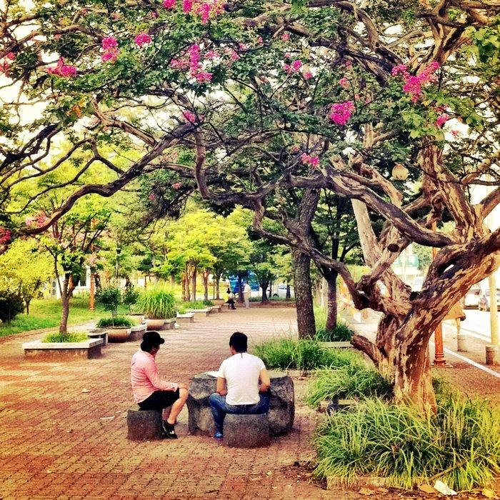 Brighta nd airy smartphotne street photo of people sitting under a tree