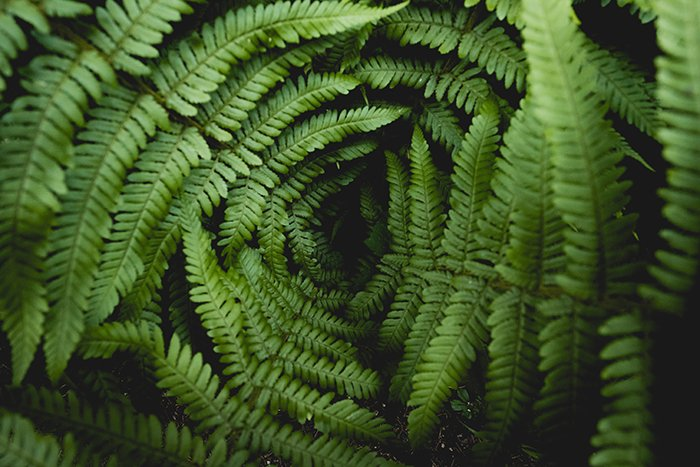 Dreamy photo of fern plants - texture in photography