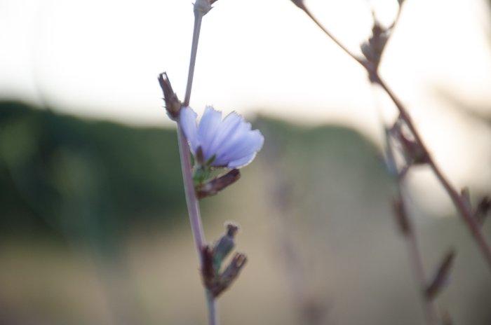 A blurry photo of a purple flower