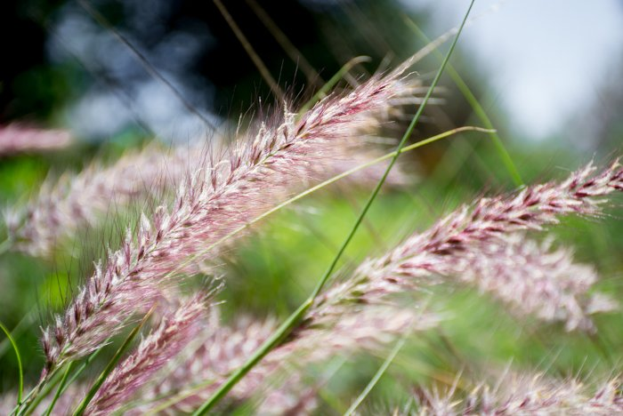A close up of plants outdoors - what is autofocus mode