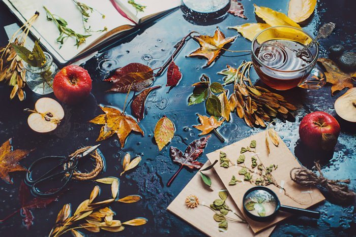 Table with tea cup, autumn leaves, apples and an open notebook with herbs. Dark food photography. Still life with rain.