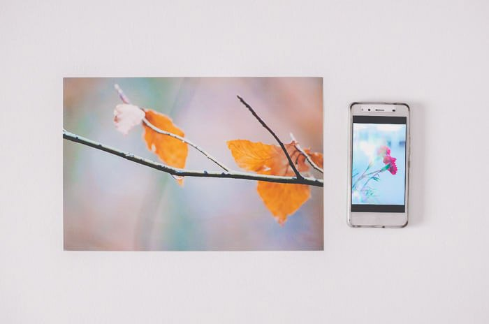A resized photo of autumn leaves beside a smartphone