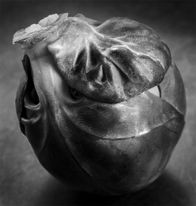 A black and white still life of a brussels sprout.