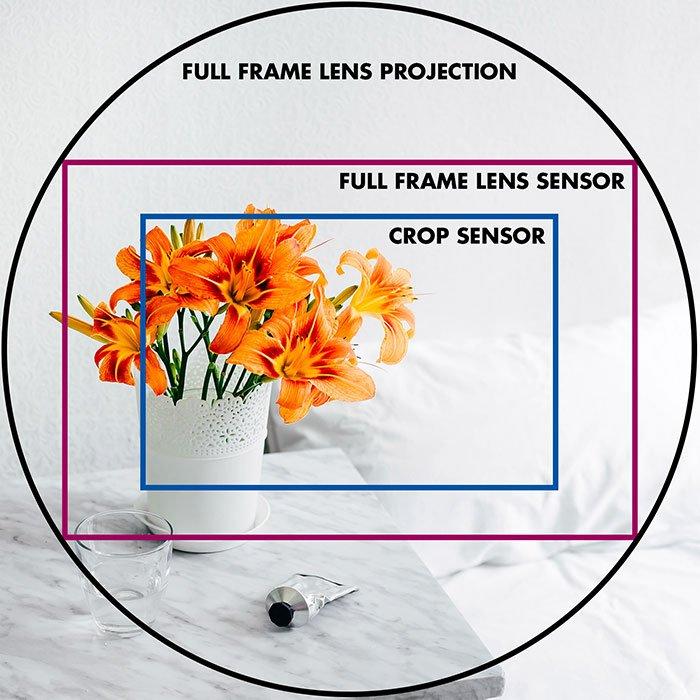 说明全框架和庄稼传感器构成的橙色花和文本的图象使用圈子和矩形在一个全框架镜头投影