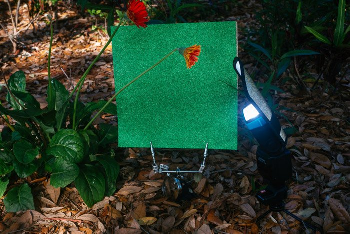 Setting up a green background for flower photography